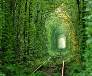Tunnel of Love, Klevan, Ukraine http://www.shutterstock.com/pic-116566117/stock-photo-natural-tunnel-of-love-formed-  by-trees-in-ukraine-klevan.html?src=jnsn4OY4FOgH14i2RsBBmw-1-0